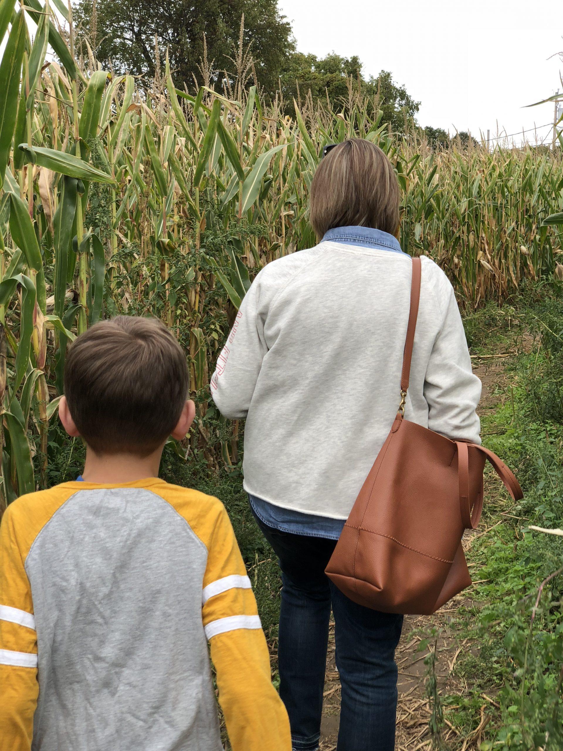Corn Mazes, Rochester NY